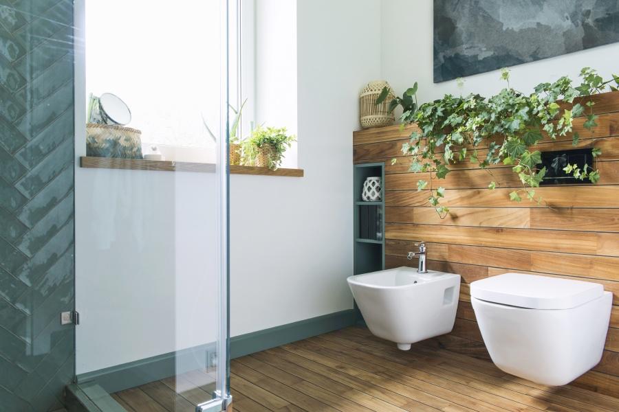 Scegliere piante in bagno: come crescerle bene