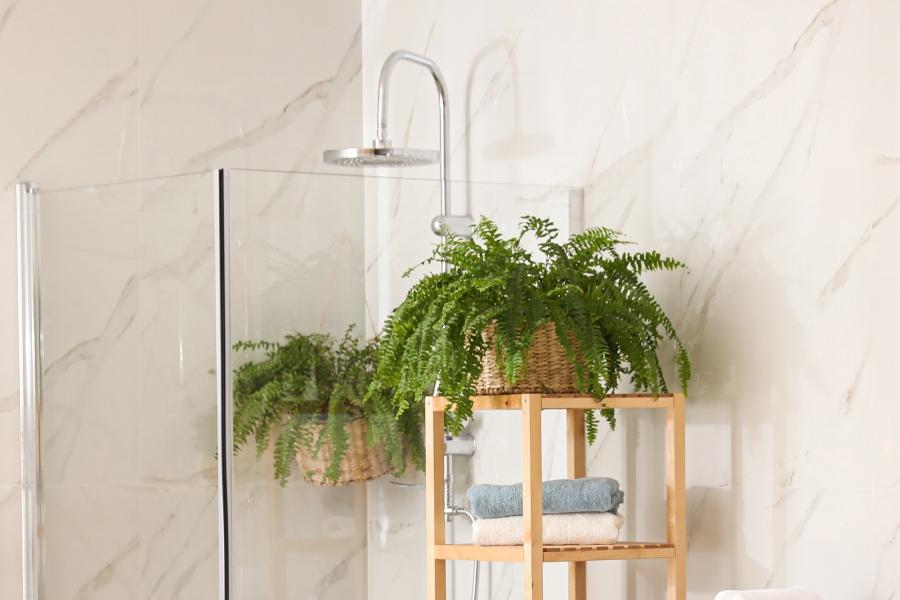 Scegliere le piante in bagno: felce