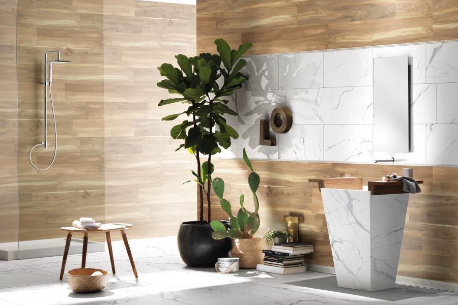 Piante in bagno: la giusta illuminazione